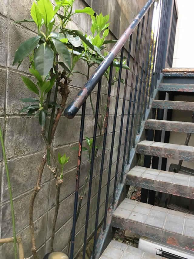 タイル床の外階段