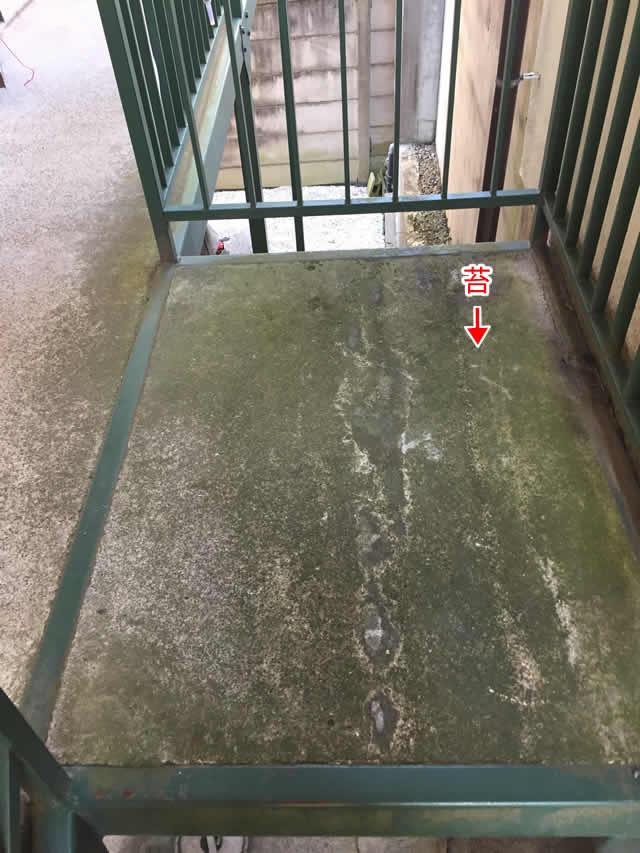 鉄廊下の床の苔
